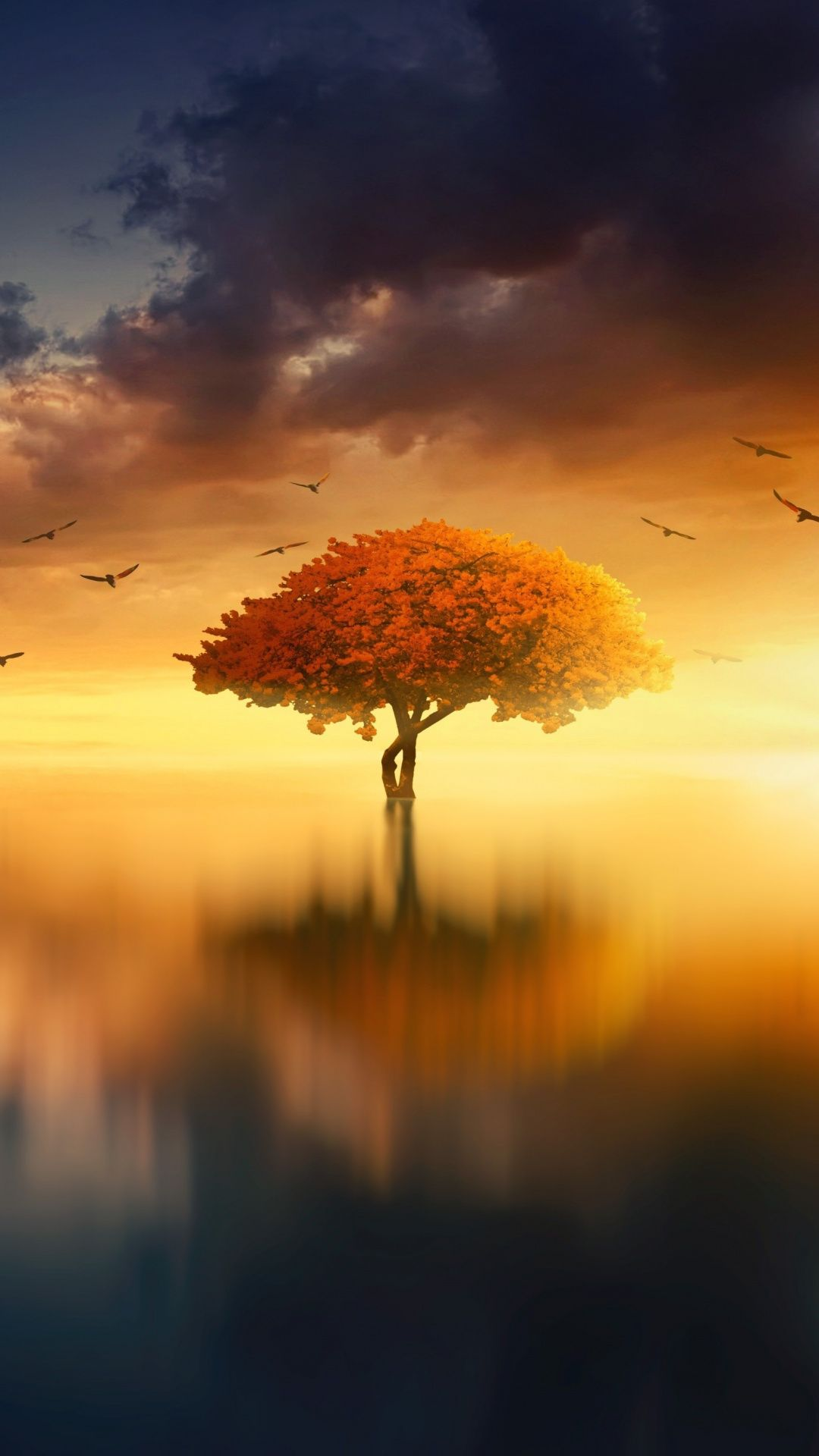 Sunset Birds Lake Tree Reflection Photoshop 1080x1920 Wallpaper Sunset Wallpaper Nature Photography Landscape Photography