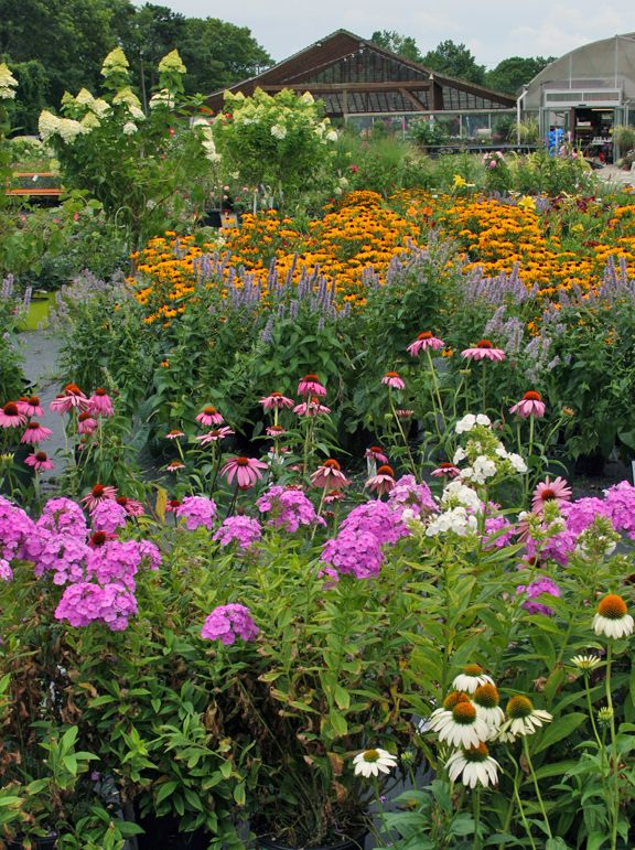 August Gardening Dos And Don Ts Hyannis Country Garden August Garden Country Gardening Perennials