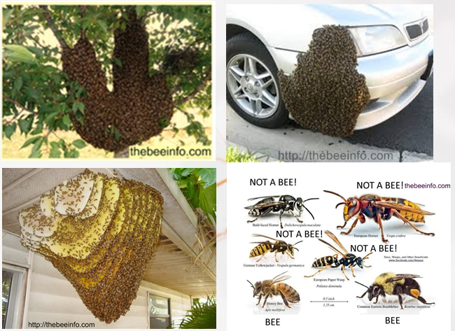 Bee Hive Removal Why You Should Not Wait 170 Bee Removal Getting Rid Of Bees Bee Hive