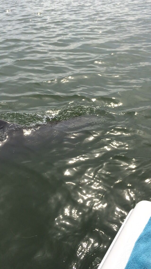 More dolphins
