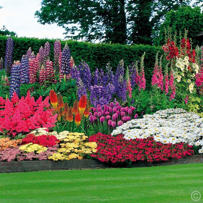 Cottage Flower Gardens: 47 Perennial Garden + 100 Bulbs Buy Online Order Yours Now