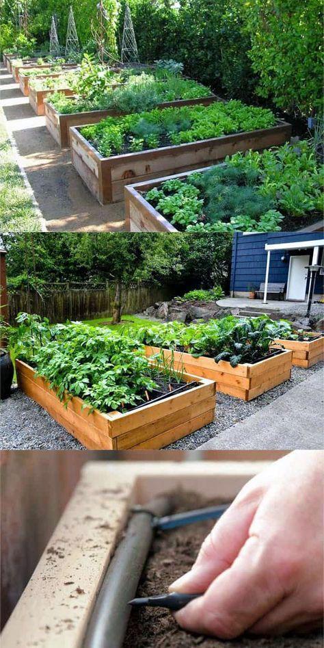 Lifted Bed Backyard Design Tips Vegetable garden raised