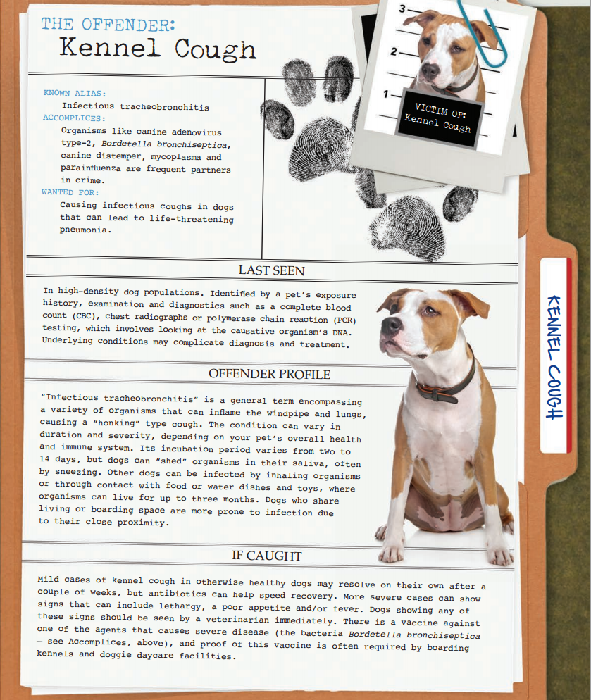 America's Most Unwanted Pet Health Conditions Kennel