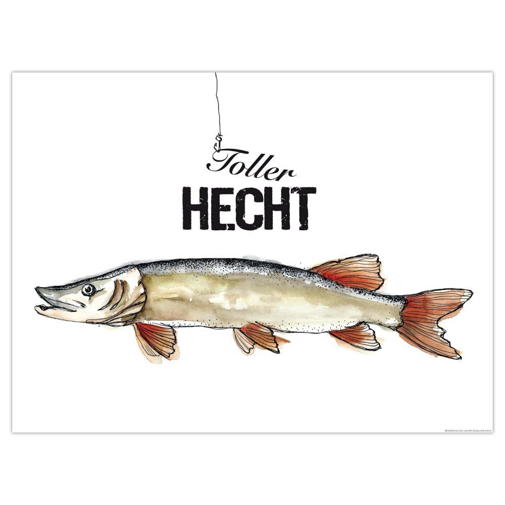 9 Hecht Ideen Hecht Bilder Fisch Illustration