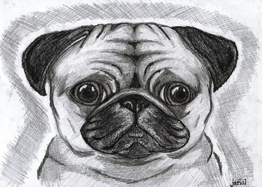 pug drawings because pugs are just the cutest things by pineappurus on deviantart