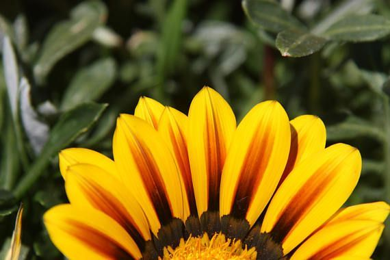 Yellow Flower Photography Nature Photography Wall Art Show Me