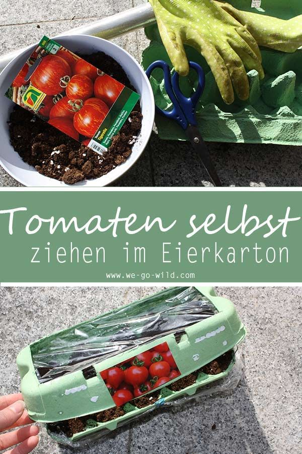 tomaten selber ziehen im eierkarton gew chshaus diy. Black Bedroom Furniture Sets. Home Design Ideas