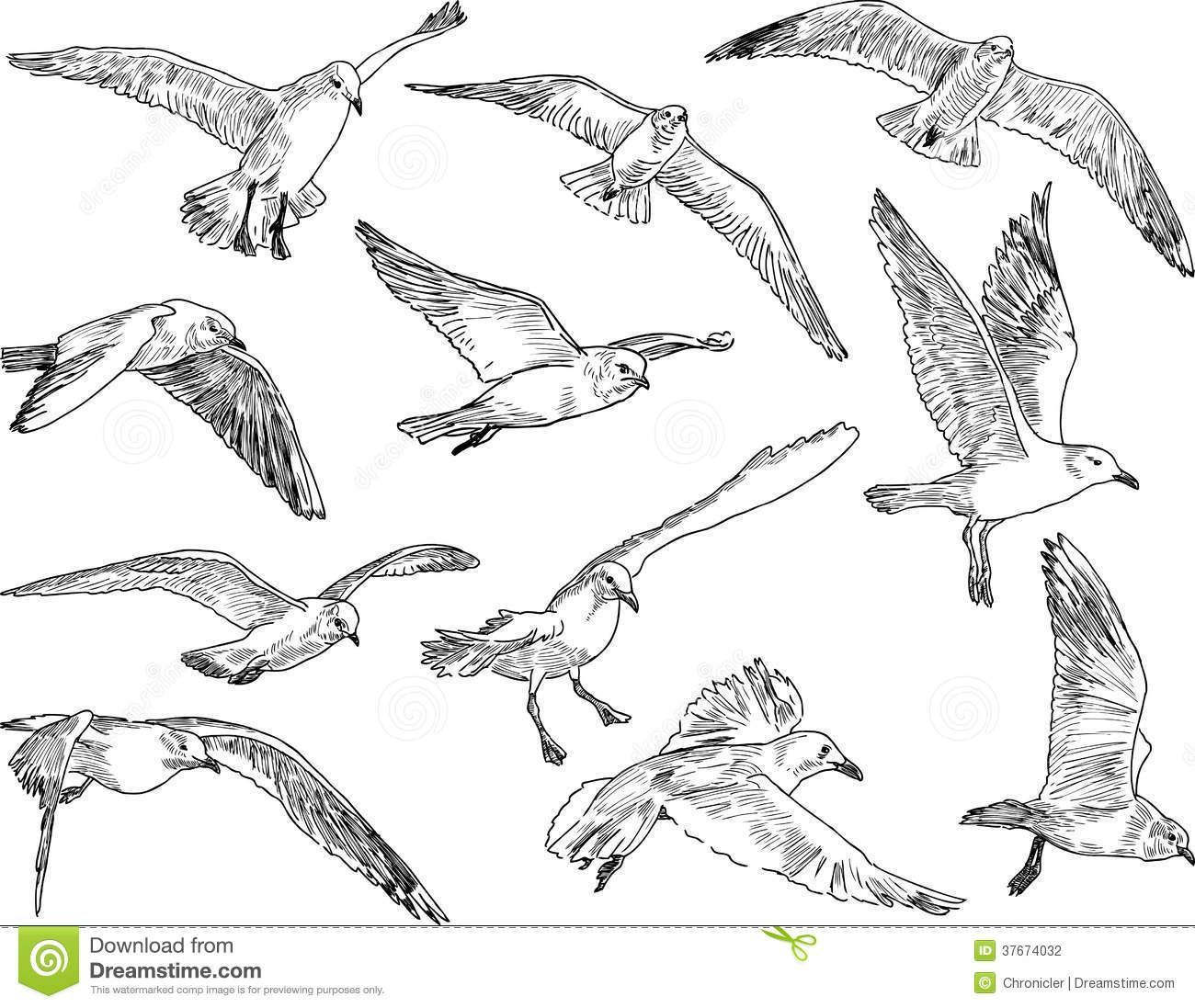 Image Result For Very Easy Drawings Of Seagulls Flying Seagull Tattoo Flying Bird Drawing Seagull Illustration