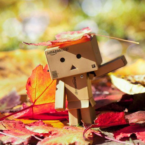 Danbo automne
