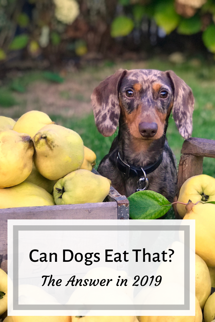 Can Dogs Eat That Food? The Answers in 2020 (With images