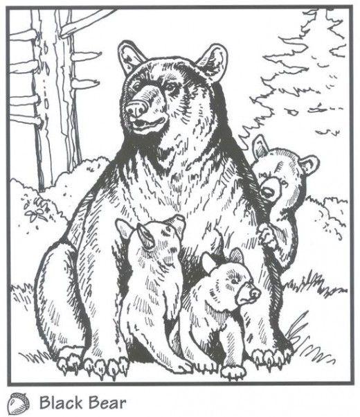 black bear coloring page # 11