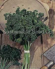 Organic Moss Curled Parsley Seeds (75 days)         Vigorous productive compact 12 in. tall plant, very dark green finely cut deeply curled leaves, grows so thickly curled that the plant resembles a bunch of moss, high yielding strain, very uniform, subtly flavored seasoning. $2.75