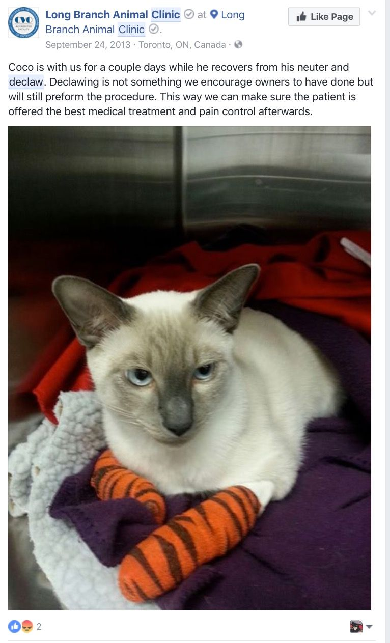 Pin By Cassywantsclaws On Declawed Cats Suffer Vet Med Vet