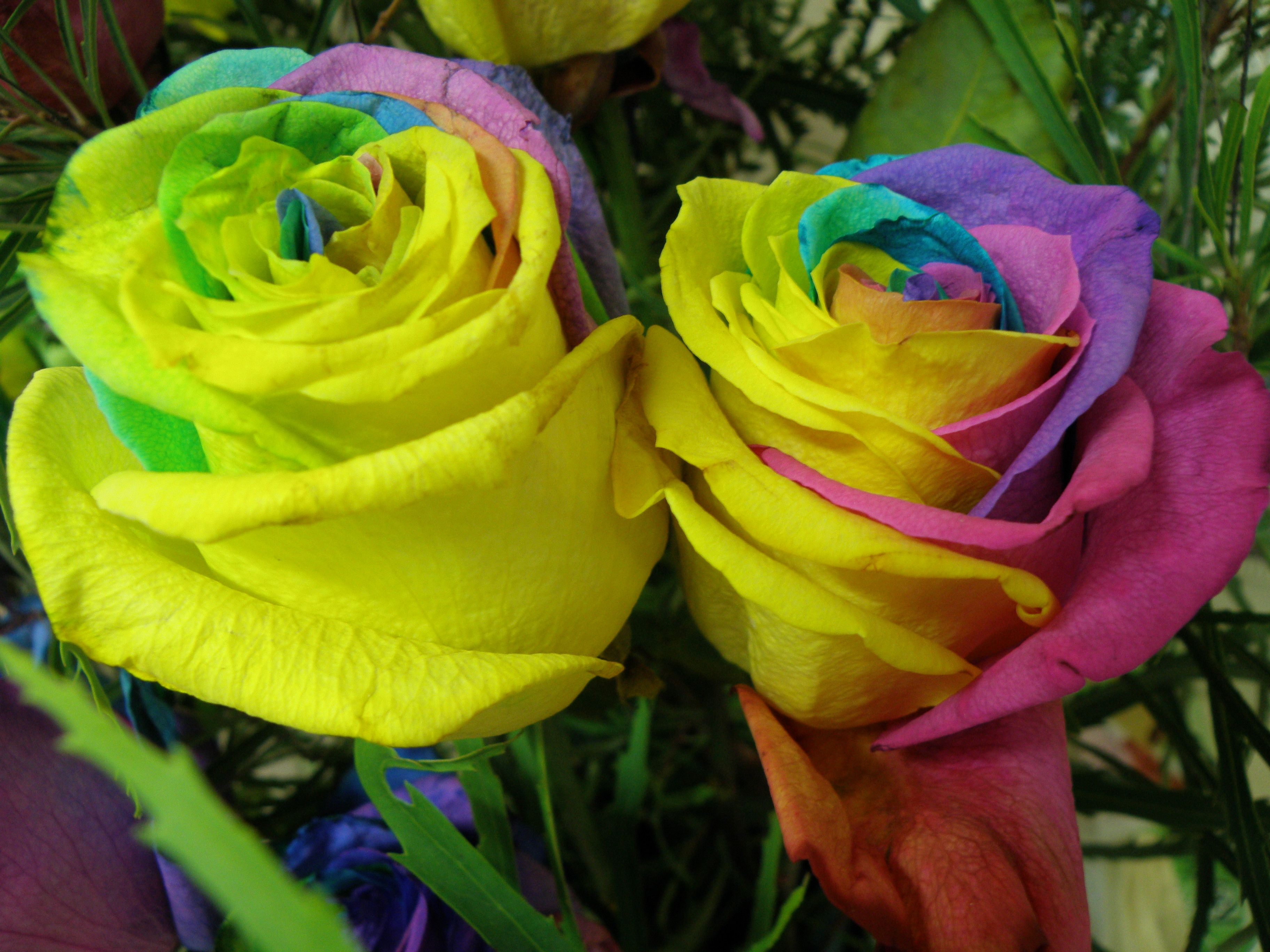 Rainbow Roses From Columbia So Pretty Vens Pinterest