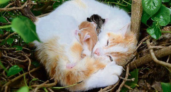 Bird Brained Cat Gives Birth To Kittens In A Nest In Louth