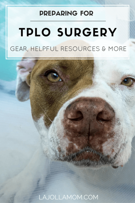 How To Prepare For Tplo Surgery Gear Resources Rottweilers