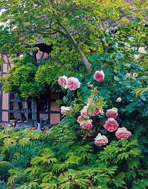 gestaltungsideen f r den cottage garten cottage garten mit rosen wohnen garten ideen rund. Black Bedroom Furniture Sets. Home Design Ideas