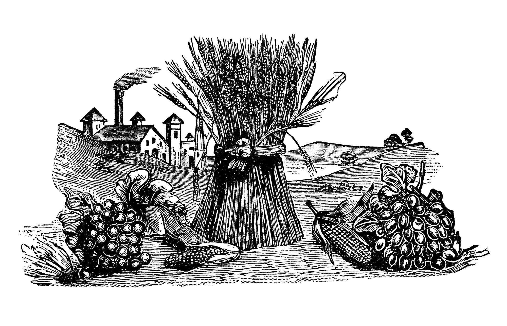 fall clip art, sheaf of wheat, fruit vegetable harvest ...