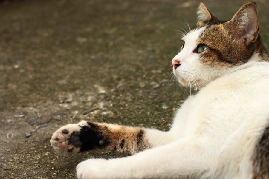How To Tame A Semi Feral Cat The Catnip Times Feral Cats Feral Kittens Cats