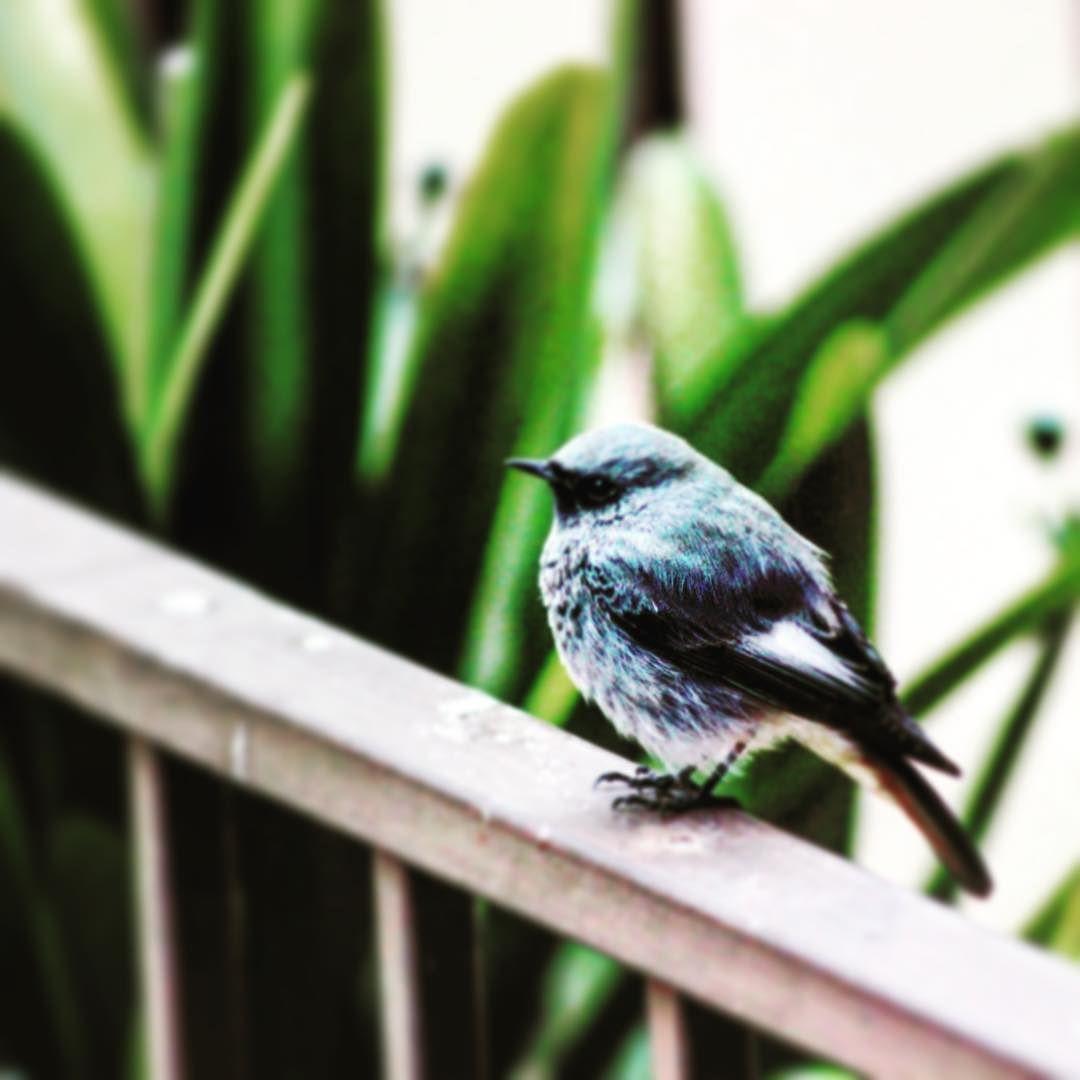 Un pajarito #pájaro  #pajaros #pajaritos #cute #nature #bird #birds #ave #carboneros #natgeo #ig_birds #birdextreme #wildlife #kings_birds #your_best_birds #birdsofinstagram #birdstagram #birdsnest