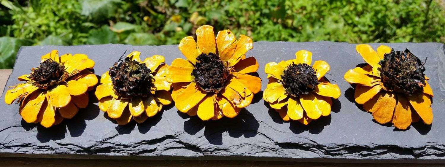 Painted pinecone daisy flowers zinnia flowers zinnia pinecones painted pine cone daisy flowers similar to painted pine cone zinnia flowers zinnia pine cones yellow izmirmasajfo Choice Image