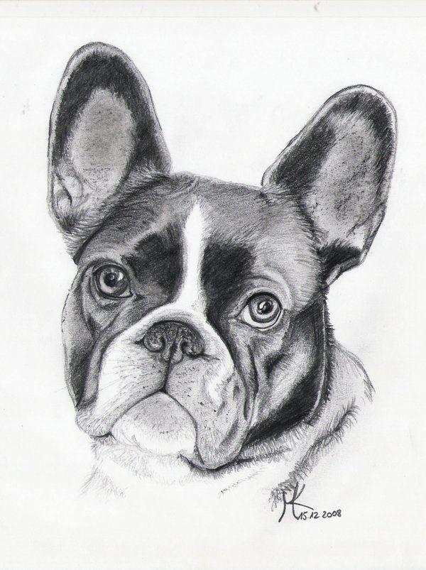 Pin Von Kathrin Auf Hund Zeichnen In 2020 Hund Malen Hund