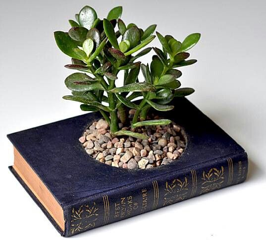 Planter made from a recycled book.