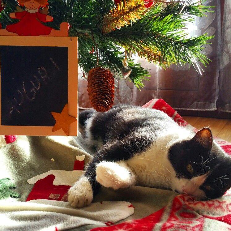 Ciatina sotto l'albero di Natale