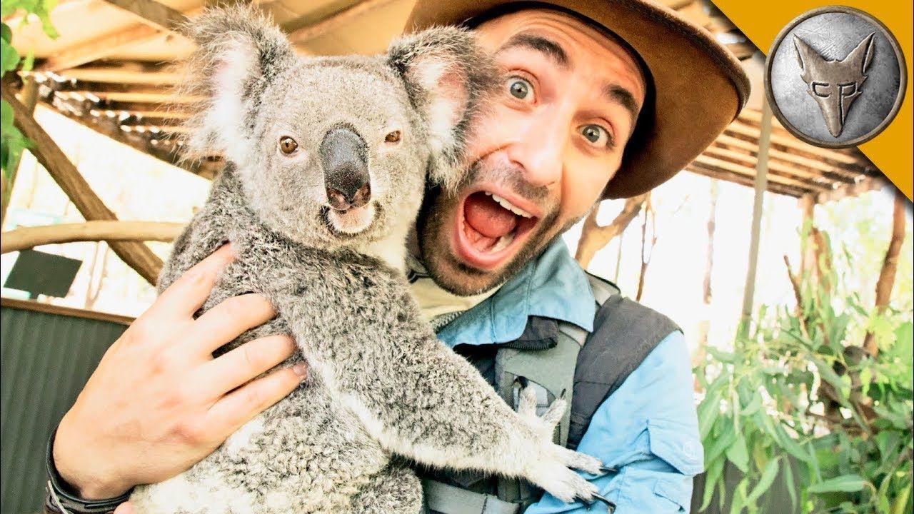 Koala Gives Stinky Hugs! YouTube Cute animals, Animals