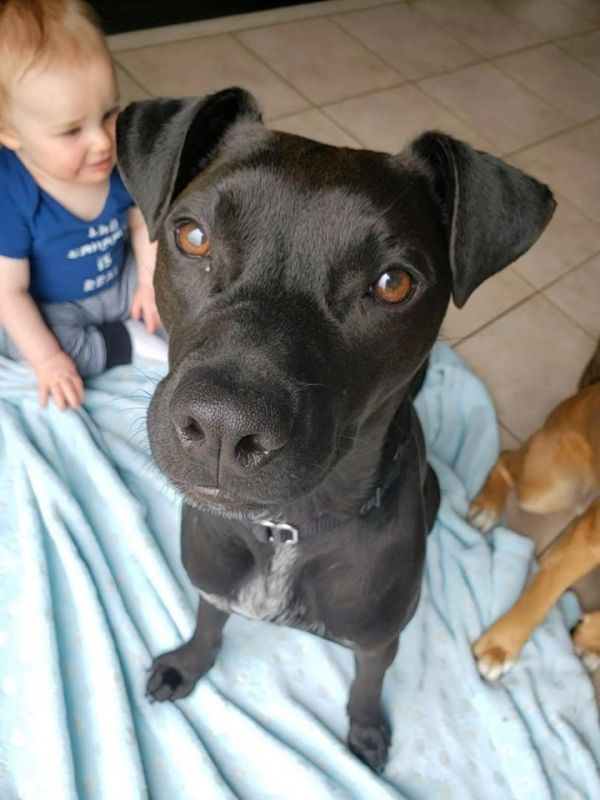 Dogs for Adoption Near Guelph, ON Petfinder Pet