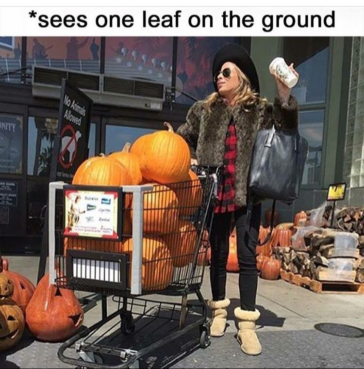 Day After Thanksgiving Meme