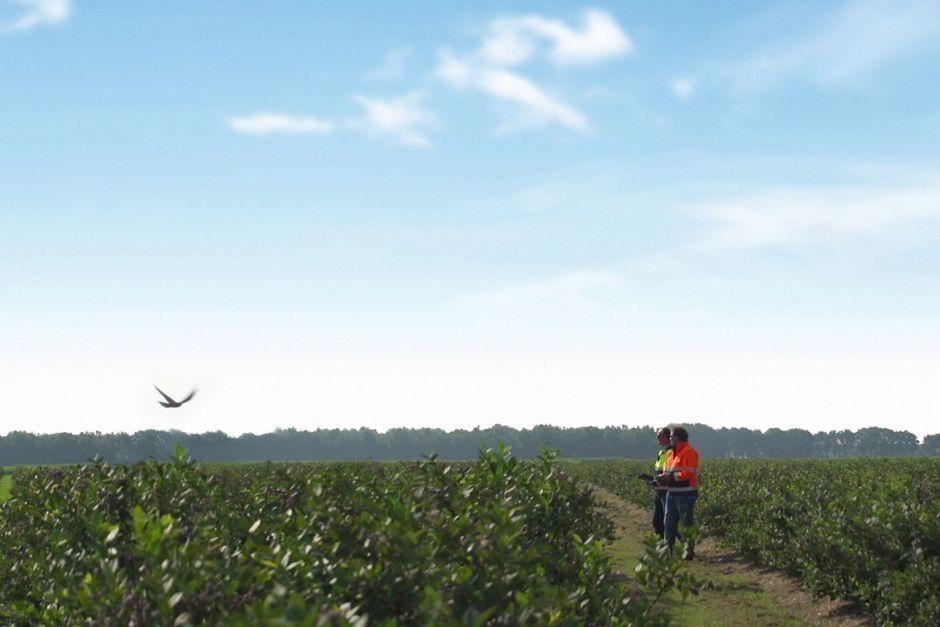Un drone oiseau au dessus d'un champ