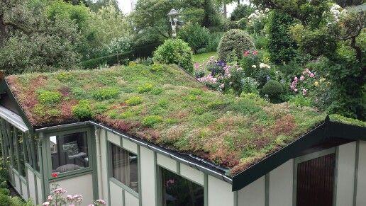 Garden chalet with roofgarden in June   Green Roofs   Pinterest ...