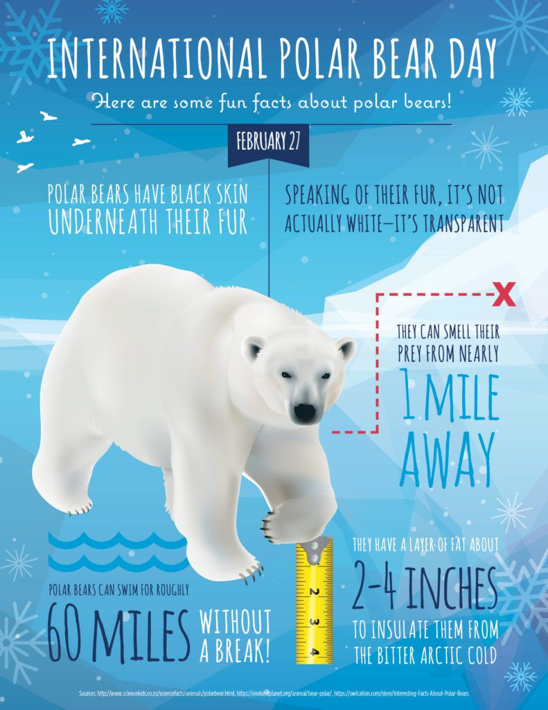 International Polar Bear Day is February 27. Infographic