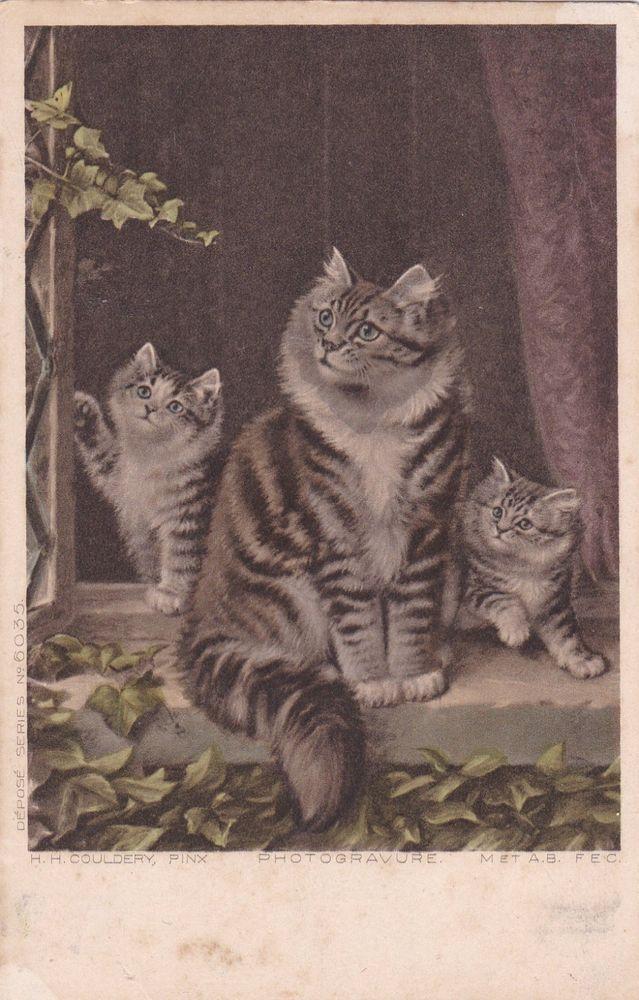 Carte Postale Old Postcard Cat Cpa Chat De Couldery En Couleur Cat Color Rare Cat Colors Cats Postcard