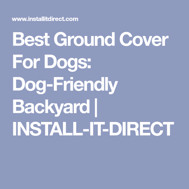 Best Ground Cover For Dogs: Dog-Friendly Backyard ...