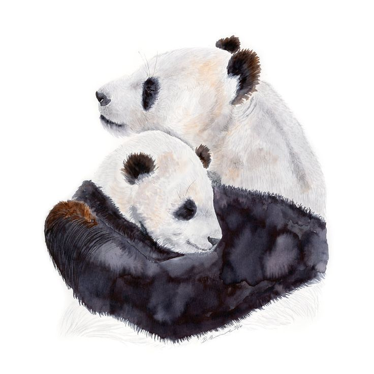 Mom and Baby Pandas by Brett Blumenthal Paper Print #babypandas