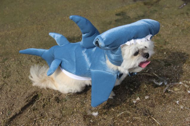 Take A Bite Out Of Our Shark Week Contest Dog Halloween Costumes
