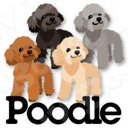 Pin By Christina Hysell On Pudel Poodle Drawing Poodle