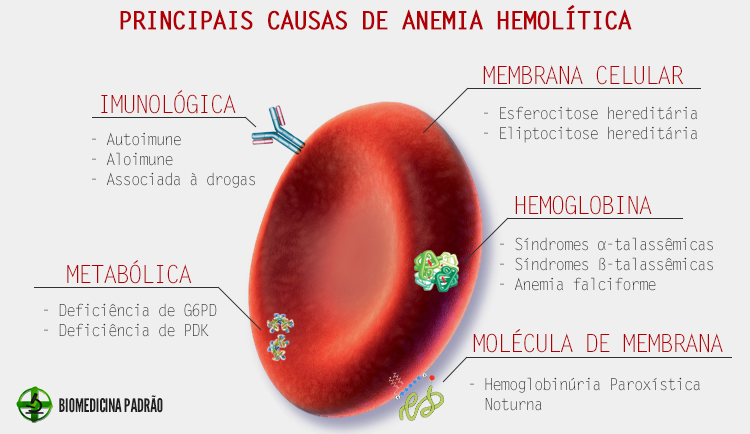 Principais causas de anemia hemolítica | Lab | Pinterest | Biología ...