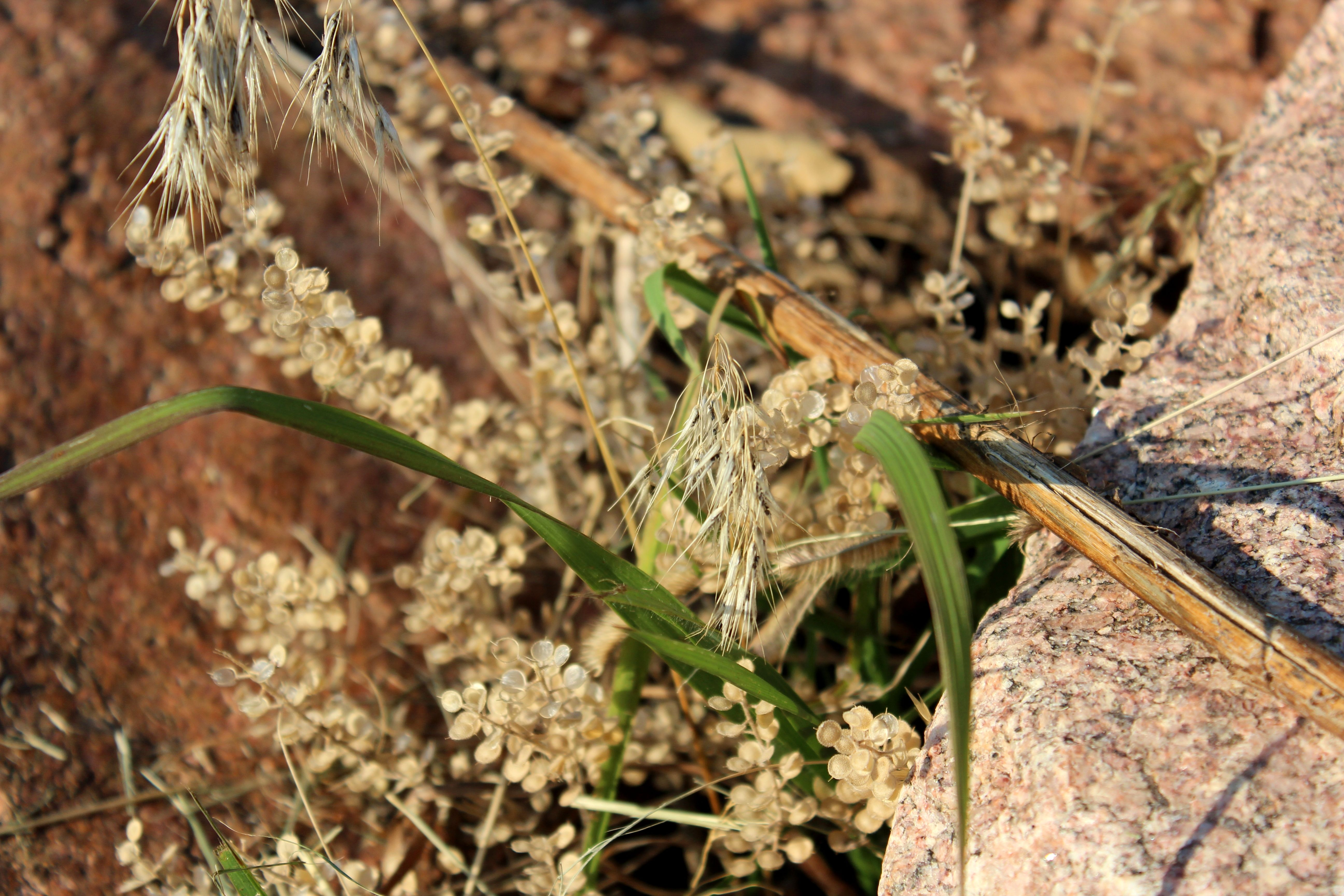 really cool combo of wheat looking plant, twig and leafy grass ...