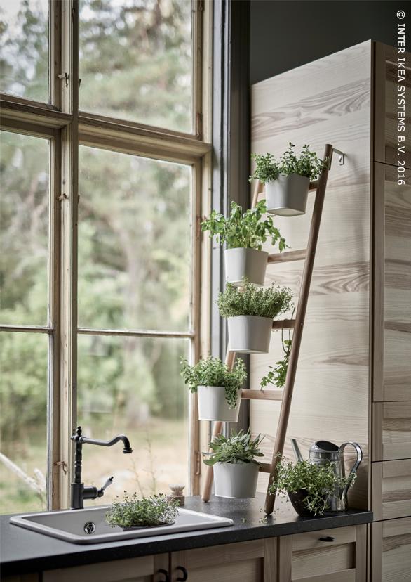Un superbe jardin intérieur avec des plantes des légumes et des herbes piédestal satsumas ikeabe