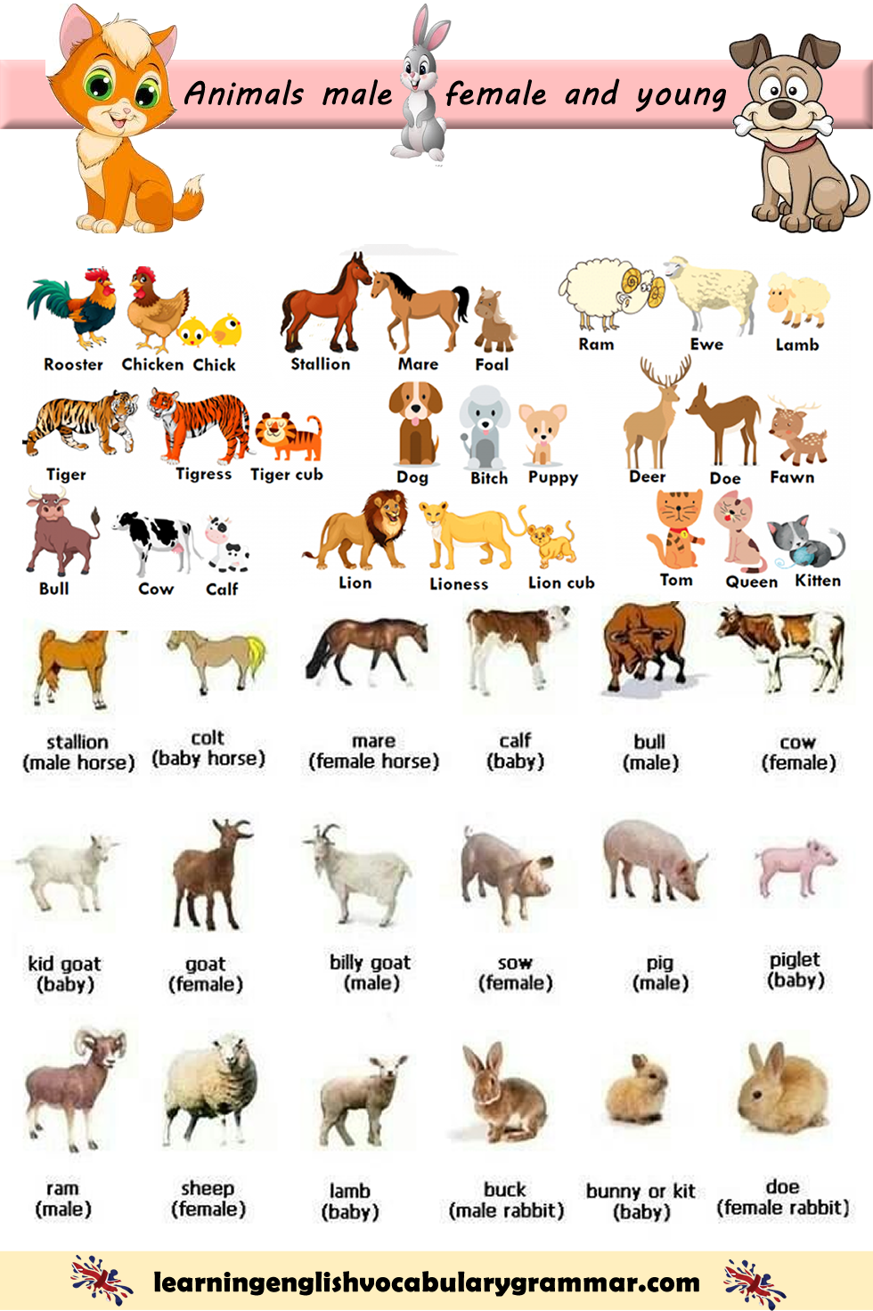 Animals Female Male Baby Names In English With Images English Vocabulary Learn English Vocabulary