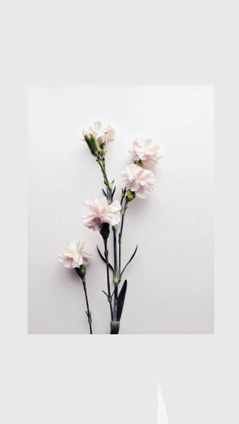 Flowers Wallpaper Tumblr Vintage Flowers Wallpaper White Roses Wallpaper Blue Flower Wallpaper