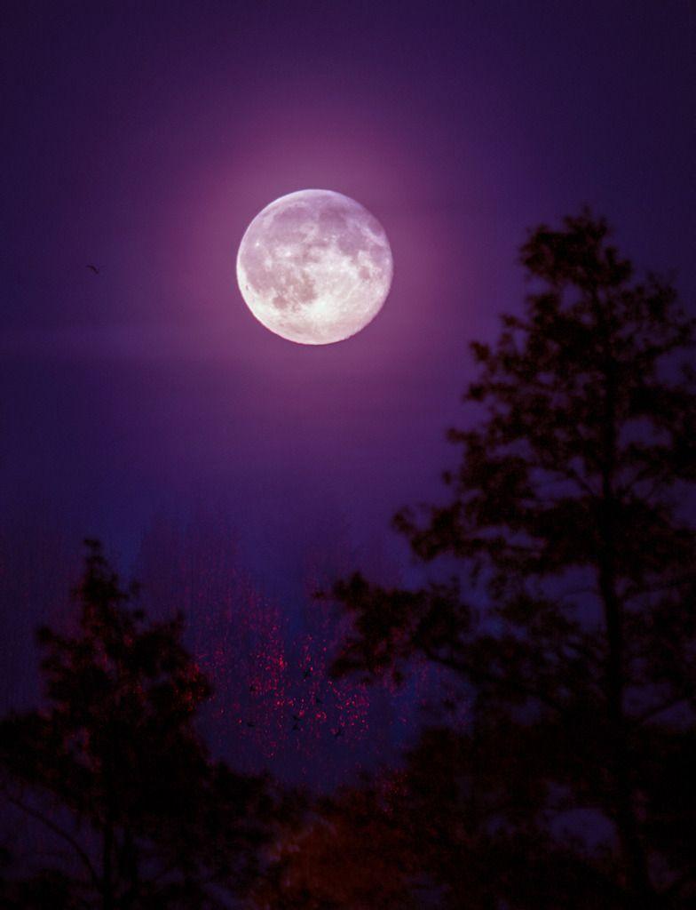 Purple Night Purple Night Moon Moonlight Moonscape Sky Night Night Sky Moon Moonscape Nature