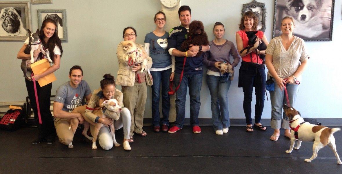 Brooklyn dog training center brooklyn dogs dog training