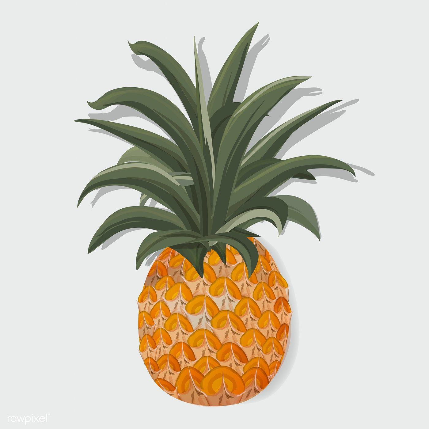 Fresh Pineapple Tropical Fruit Vector Illustration free