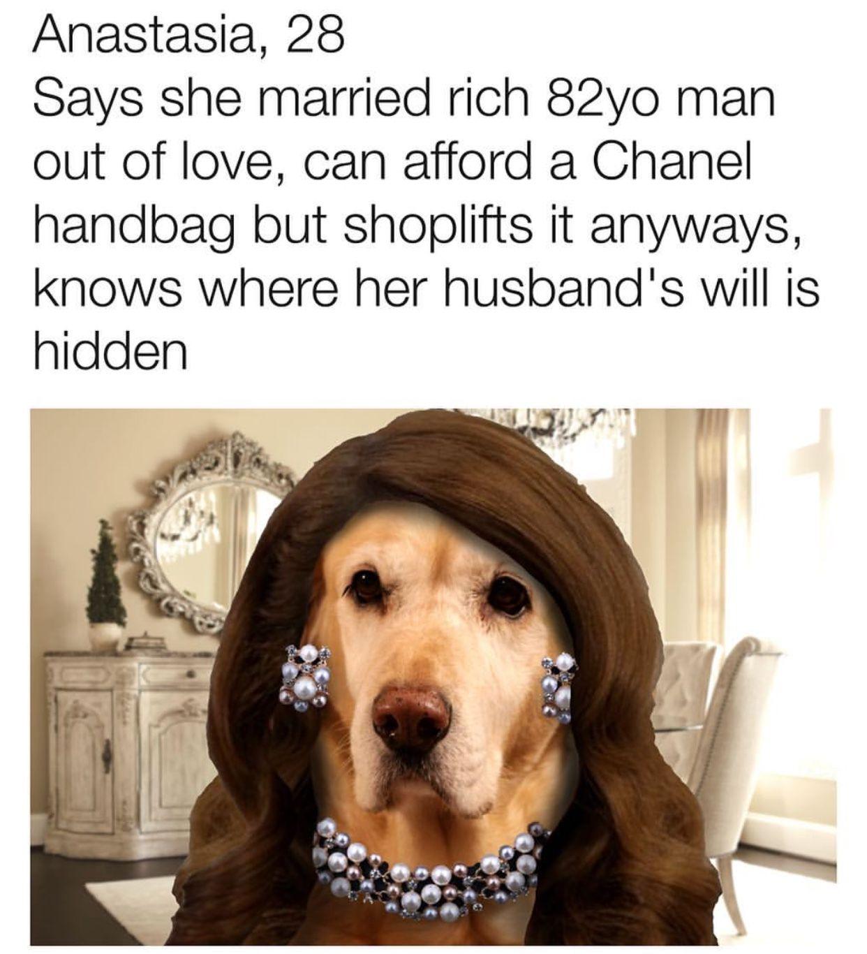 why dogs pinterest dog memes and dog memes