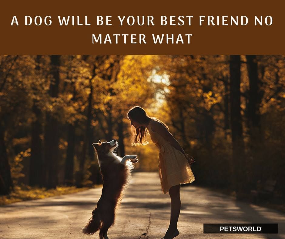True That D Dogs Are Love 3 Petsworld Dogs Dogsandpuppies Quotes Quoteoftheday Airedale Dogs Buy Pets Pets