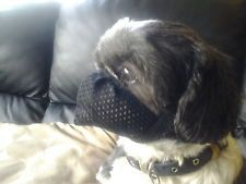 Dog Muzzle Especially Made For Flat Faced Dogs Ie Shih Tzu